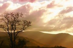 светлые валы Стоковое Изображение RF