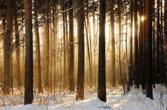 светлые валы Стоковое Фото