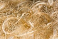 светлые волосы стоковое изображение rf