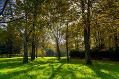 Светлые игры между деревьями в Турине Пьемонте, Италии Стоковая Фотография