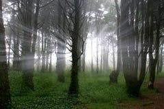 светлый дух Стоковые Фото