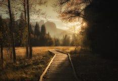 светлый путь стоковые изображения
