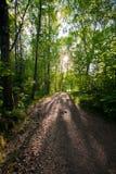 светлый путь Стоковое Изображение RF