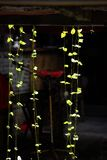 светлый reversible завода стоковое изображение rf