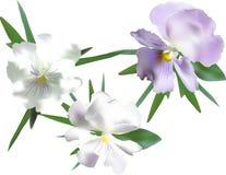 3 светлых цветка фиолета сада изолированного на белизне стоковое изображение rf