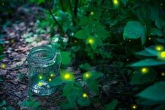 Светляк в опарнике стоковое изображение rf