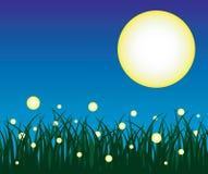 светляк Стоковое Изображение