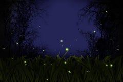 светляк Стоковое Изображение RF