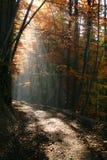 световой луч стоковое изображение rf