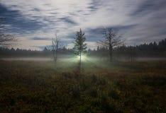 Световые лучи за деревом в тумане стоковая фотография