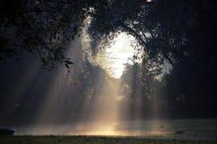 световые лучи Стоковая Фотография RF