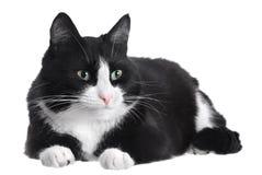 Светотеневой кот Стоковая Фотография RF