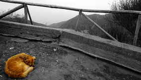 Светотеневой фотоснимок Покрашенный только русый лежать бездомной собаки сиротливый на том основании рядом с окурком стоковые фотографии rf