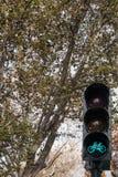 Светофор велосипеда на предпосылке дерева стоковая фотография rf