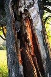 Светящее дерево стоковые фото