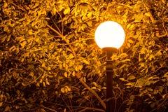 Светящие уличный свет и листва на ноче Стоковые Изображения