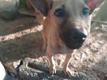 Светя глаза собаки стоковые фото