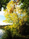Светя дерево Стоковые Фотографии RF
