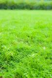 Светя трава Стоковые Изображения