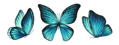 Свет 3 акварелей - голубые яркие бабочки стоковая фотография