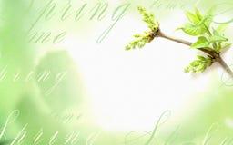 Светлая предпосылка с зеленым разрешением на ветви дерева Стоковые Изображения