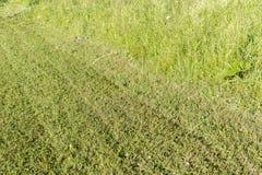 Светлая предпосылка травы Стоковое Изображение
