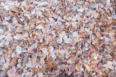 Светлая предпосылка seashells Стоковые Фото