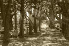 Свет бога погоста светя через деревья в кладбище стоковая фотография rf