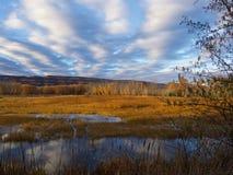 Свет болота в ноябре стоковое фото