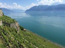 Свет весны, Lavaux, ЮНЕСКО, виноградники Стоковые Изображения RF