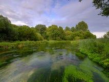 Свет вечера лета золотой на реке Itchen - полном Crowfoot воды (aquatilis лютика) и известной мухы потока мела стоковая фотография rf