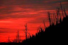 Свет восхода солнца огня красный с Silhouetted мертвыми соснами на держателе стоковая фотография