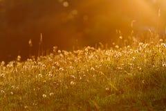 Свет восхода солнца на луге Стоковое Изображение RF