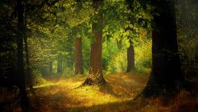 Свет в лесе Стоковые Фото