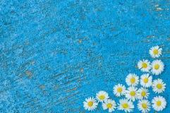 Свет - голубая старая текстурированная предпосылка с маргариткой цветет бирюза Стоковое Изображение