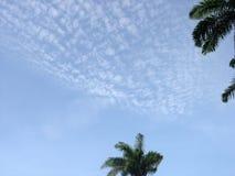 Свет - голубое небо с листьями ладони стоковая фотография rf