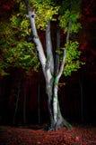 Свет дерева на ноче Стоковое фото RF