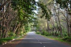 Свет дерева Стоковое Фото