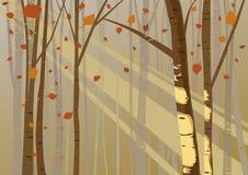 Свет леса в осени Стоковая Фотография