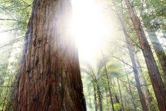 Свет леса стоковое изображение