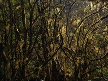 Свет леса Стоковые Фото