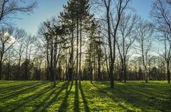 Свет леса Стоковые Фотографии RF
