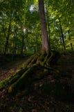 Свет леса Стоковая Фотография RF