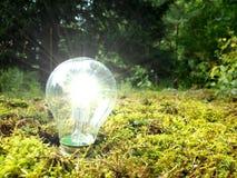 Свет леса Eco Стоковое Изображение RF