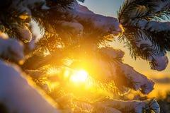 Свет захода солнца в зиме Стоковое Фото