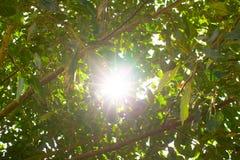 Свет и дерево Солнця Стоковые Фото