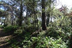 Свет и тени в лесе Стоковая Фотография