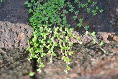 Свет и тень листьев Стоковое Фото