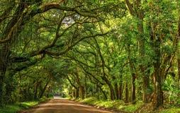 Свет и тень дороги Южной Каролины острова Edisto залива ботаники Стоковое Изображение RF