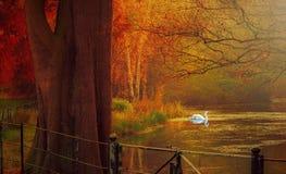 Свет и цвет осени в haampstead Лондоне Стоковое фото RF